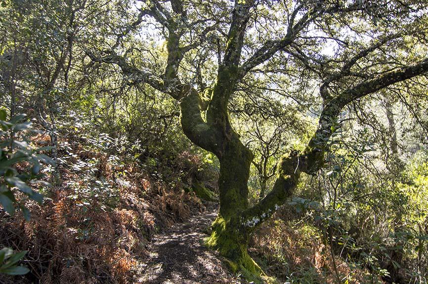 Ruta senderismo a los Tejos del Cerezal
